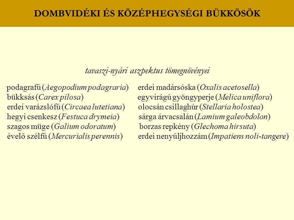 DOMBVIDÉKI ÉS KÖZÉPHEGYSÉGI BÜKKÖSÖK tavaszi-nyári aszpektus tömegnövényei podagrafű (Aegopodium podagraria) erdei madársóska (Oxalis acetosella) bükk