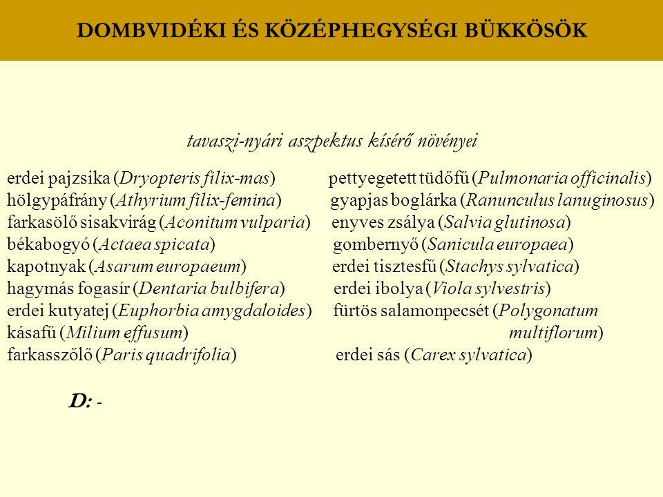 DOMBVIDÉKI ÉS KÖZÉPHEGYSÉGI BÜKKÖSÖK tavaszi-nyári aszpektus kísérő növényei erdei pajzsika (Dryopteris filix-mas) pettyegetett tüdőfű (Pulmonaria off