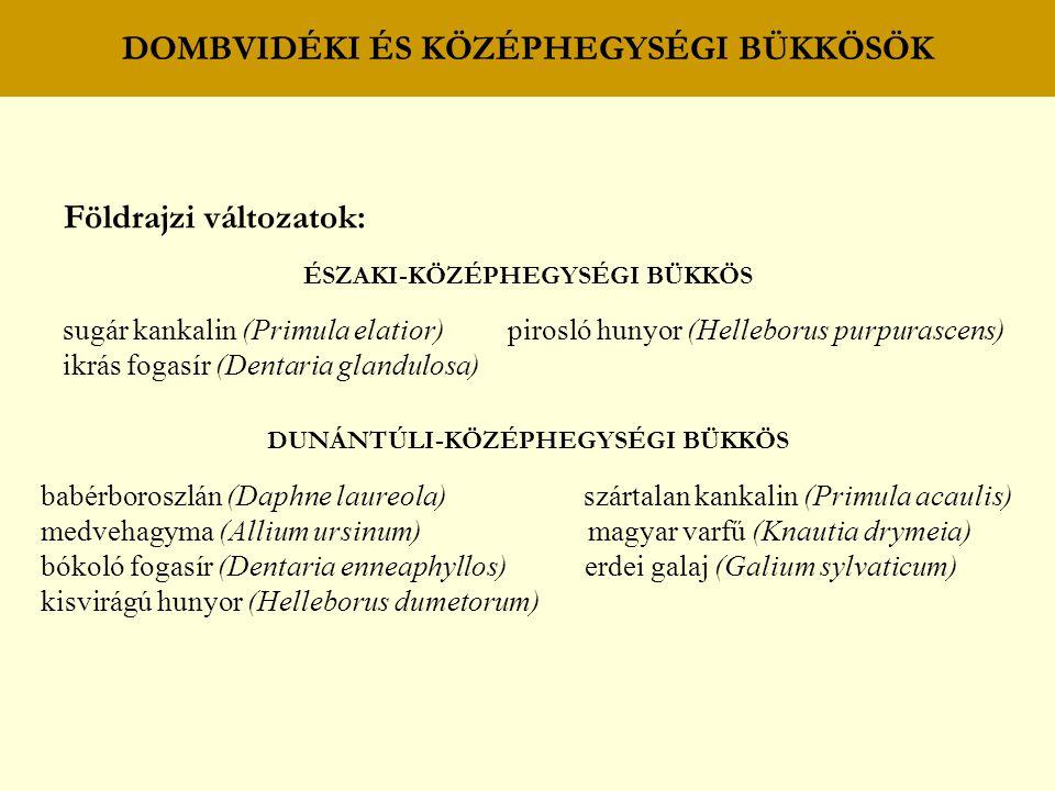 DOMBVIDÉKI ÉS KÖZÉPHEGYSÉGI BÜKKÖSÖK Földrajzi változatok: ÉSZAKI-KÖZÉPHEGYSÉGI BÜKKÖS sugár kankalin (Primula elatior) pirosló hunyor (Helleborus pur