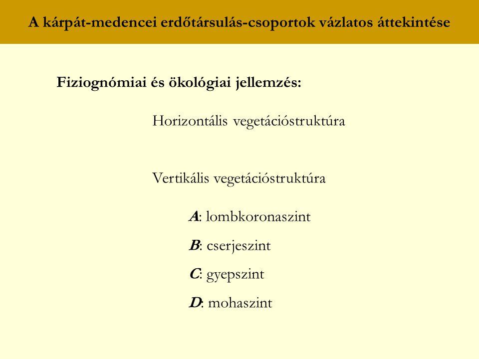 A kárpát-medencei erdőtársulás-csoportok vázlatos áttekintése Fiziognómiai és ökológiai jellemzés: Horizontális vegetációstruktúra Vertikális vegetáci