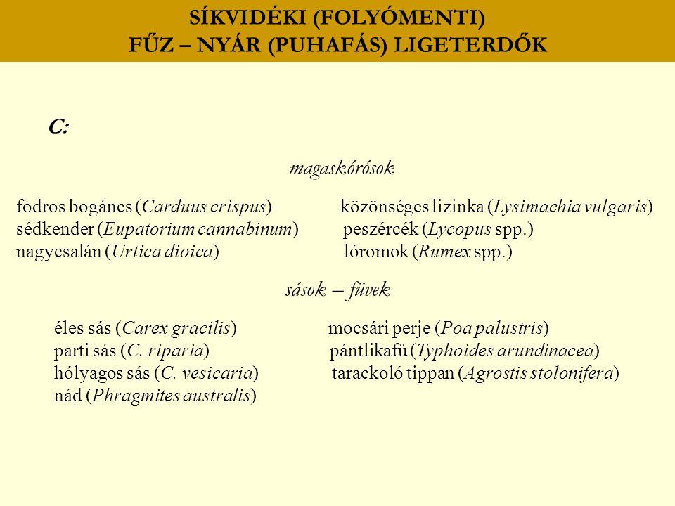 SÍKVIDÉKI (FOLYÓMENTI) FŰZ – NYÁR (PUHAFÁS) LIGETERDŐK C: magaskórósok fodros bogáncs (Carduus crispus) közönséges lizinka (Lysimachia vulgaris) sédke