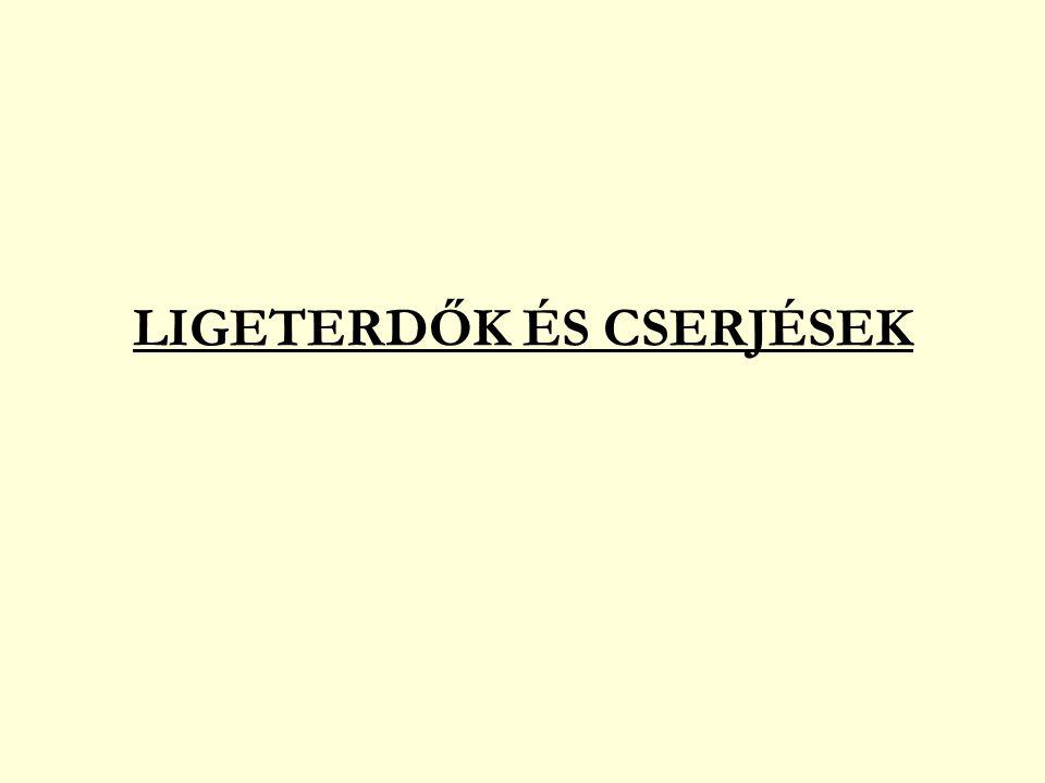 HEGY- ÉS DOMBVIDÉKI (PATAKMENTI) LIGETERDŐK DOMBVIDÉKI ÉGERLIGET fehér fűz (Salix alba) fehér nyár (Populus alba) láperdei fajok is mocsári zsurló (Equisetum palustre) kétlaki macskagyökér (Valeriana dioica) mocsári pajzsika (Thelypteris palustris) posványsás (Carex acutiformis) mocsári galaj (Galium palustre) zsombéksás (C.