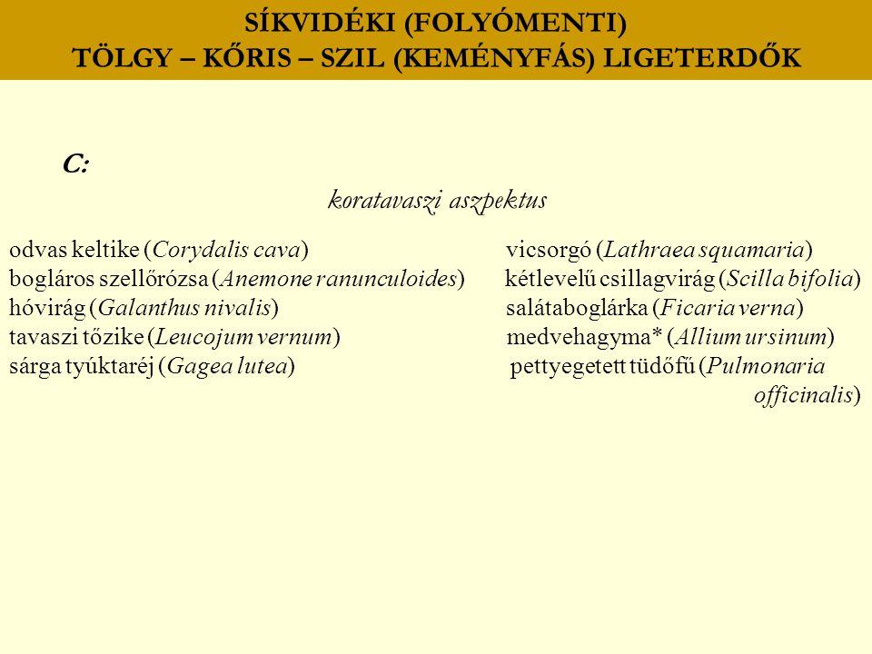 SÍKVIDÉKI (FOLYÓMENTI) TÖLGY – KŐRIS – SZIL (KEMÉNYFÁS) LIGETERDŐK C: koratavaszi aszpektus odvas keltike (Corydalis cava) vicsorgó (Lathraea squamari