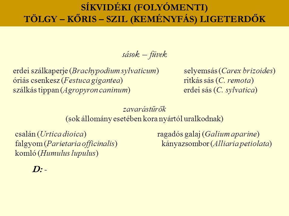 SÍKVIDÉKI (FOLYÓMENTI) TÖLGY – KŐRIS – SZIL (KEMÉNYFÁS) LIGETERDŐK sások – füvek erdei szálkaperje (Brachypodium sylvaticum) selyemsás (Carex brizoide