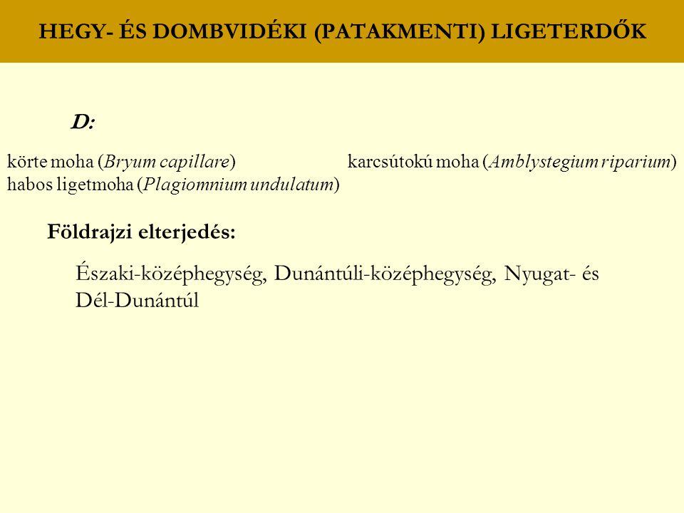 HEGY- ÉS DOMBVIDÉKI (PATAKMENTI) LIGETERDŐK D: körte moha (Bryum capillare) karcsútokú moha (Amblystegium riparium) habos ligetmoha (Plagiomnium undul