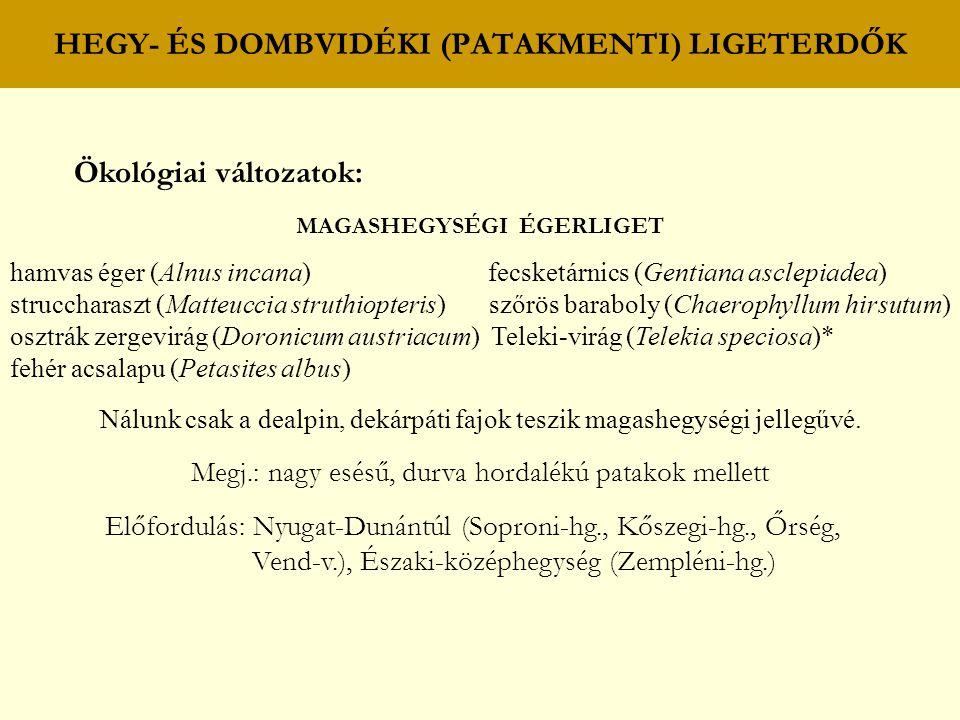 HEGY- ÉS DOMBVIDÉKI (PATAKMENTI) LIGETERDŐK Ökológiai változatok: MAGASHEGYSÉGI ÉGERLIGET hamvas éger (Alnus incana) fecsketárnics (Gentiana asclepiad