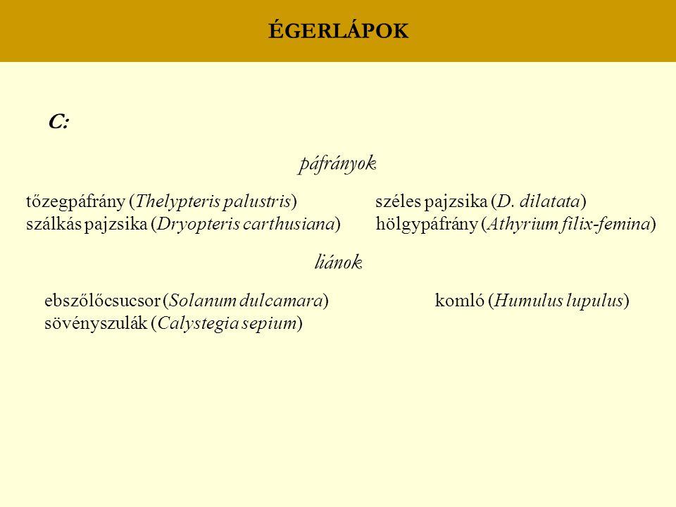 ÉGERLÁPOK C: páfrányok tőzegpáfrány (Thelypteris palustris) széles pajzsika (D. dilatata) szálkás pajzsika (Dryopteris carthusiana) hölgypáfrány (Athy