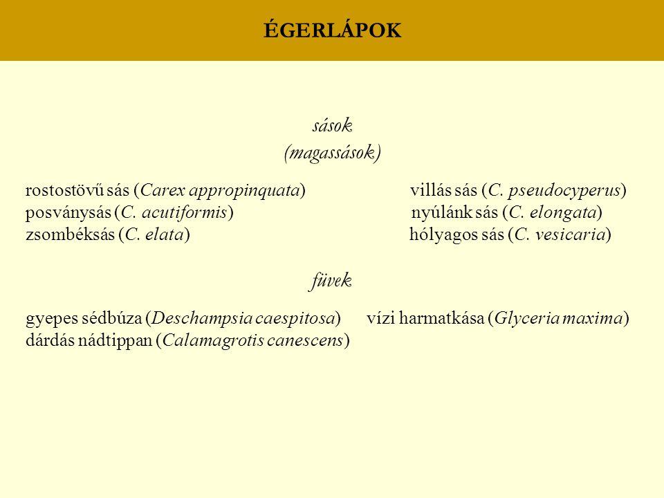 ÉGERLÁPOK sások (magassások) rostostövű sás (Carex appropinquata) villás sás (C. pseudocyperus) posványsás (C. acutiformis) nyúlánk sás (C. elongata)