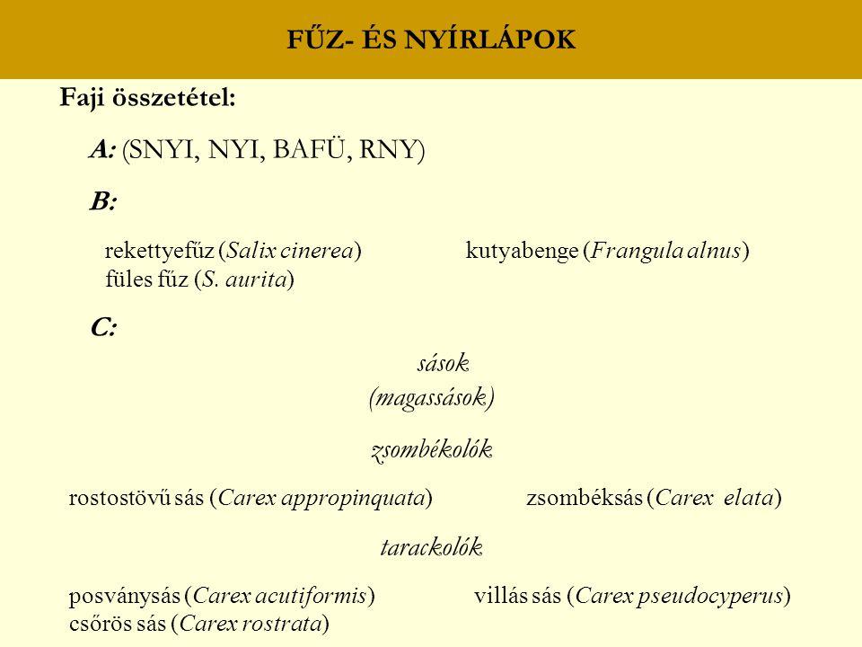 FŰZ- ÉS NYÍRLÁPOK Faji összetétel: A: (SNYI, NYI, BAFÜ, RNY) B: rekettyefűz (Salix cinerea) kutyabenge (Frangula alnus) füles fűz (S. aurita) C: sások