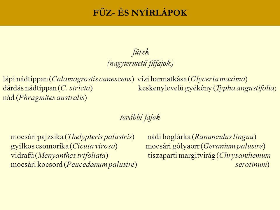 FŰZ- ÉS NYÍRLÁPOK füvek (nagytermetű fűfajok) lápi nádtippan (Calamagrostis canescens) vízi harmatkása (Glyceria maxima) dárdás nádtippan (C. stricta)