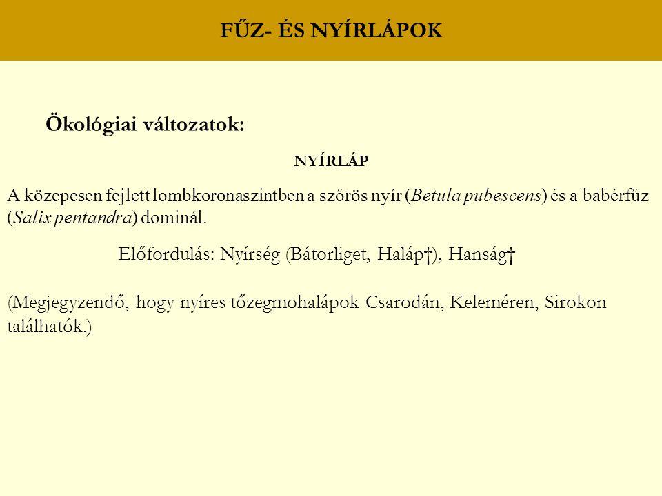 FŰZ- ÉS NYÍRLÁPOK Ökológiai változatok: NYÍRLÁP A közepesen fejlett lombkoronaszintben a szőrös nyír (Betula pubescens) és a babérfűz (Salix pentandra