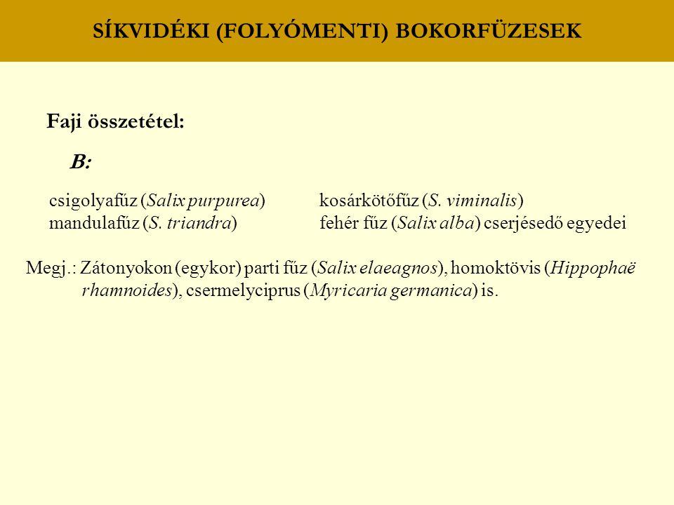 SÍKVIDÉKI (FOLYÓMENTI) FŰZ – NYÁR (PUHAFÁS) LIGETERDŐK mocsári galaj (Galium palustre) mocsári tisztesfű (Stachys palustris) nyári tőzike (Leucojum aestivum) erdei nenyúljhozzám (Impatiens noli-tangere) mocsári nefelejcs (Myosotis palustris) menták (Mentha spp.) keserűfüvek (Polygonum spp.) fekete nadálytő (Symphytum officinale) kányafüvek (Rorippa spp.) kúszó boglárka (Ranunculus repens) adventív gyomfajok bíbornenyúljhozzám (Impatiens glandulifera) egynyári seprence (Stenactis annua) magas aranyvessző (Solidago gigantea) kúpvirágok (Rudbeckia spp.) őszirózsák (Aster spp.) sokvirágú napraforgó (Helianthus decapetalus) D: -