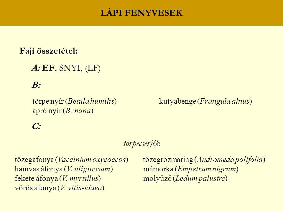 LÁPI FENYVESEK Faji összetétel: A: EF, SNYI, (LF) B: törpe nyír (Betula humilis) kutyabenge (Frangula alnus) apró nyír (B. nana) C: törpecserjék tőzeg