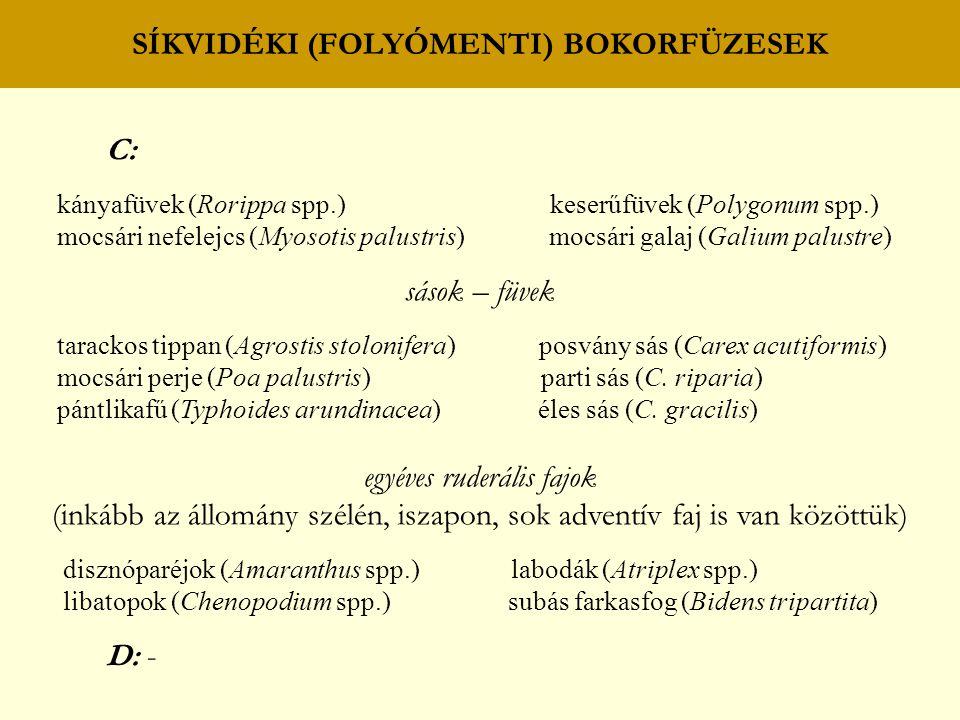 SÍKVIDÉKI (FOLYÓMENTI) TÖLGY – KŐRIS – SZIL (KEMÉNYFÁS) LIGETERDŐK sások – füvek erdei szálkaperje (Brachypodium sylvaticum) selyemsás (Carex brizoides) óriás csenkesz (Festuca gigantea) ritkás sás (C.