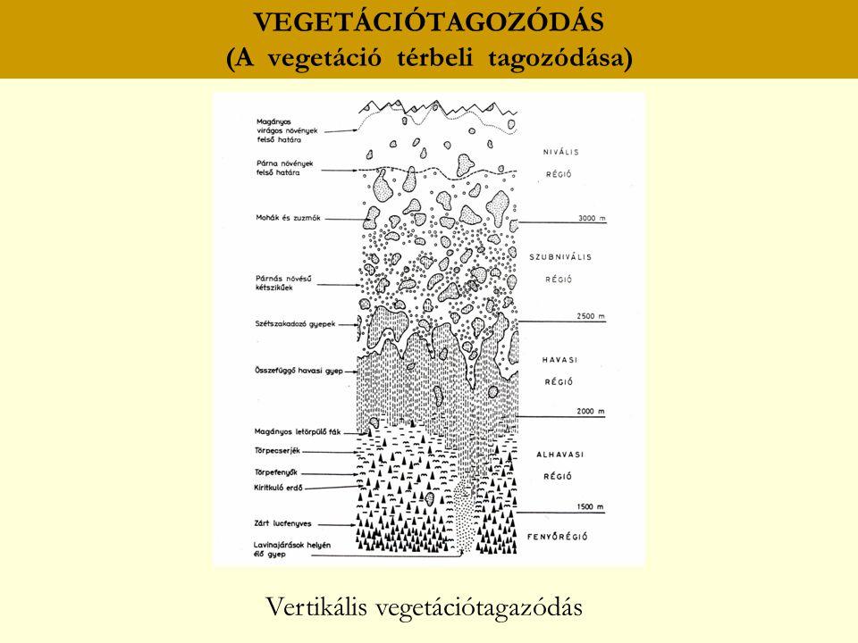 VEGETÁCIÓTAGOZÓDÁS (A vegetáció térbeli tagozódása) Vertikális vegetációtagazódás