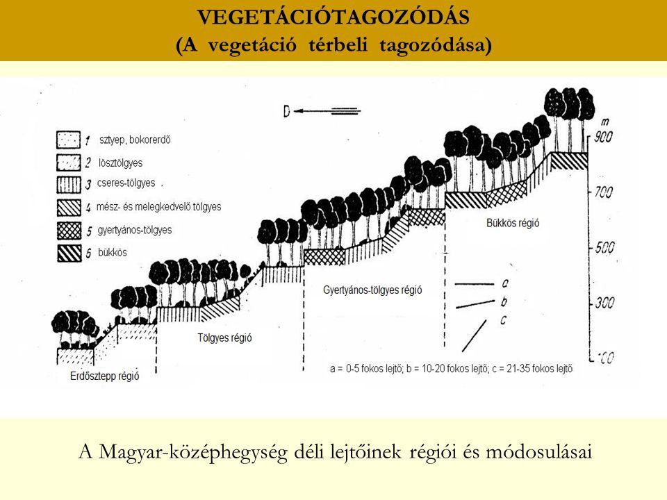 VEGETÁCIÓTAGOZÓDÁS (A vegetáció térbeli tagozódása) A Magyar-középhegység déli lejtőinek régiói és módosulásai