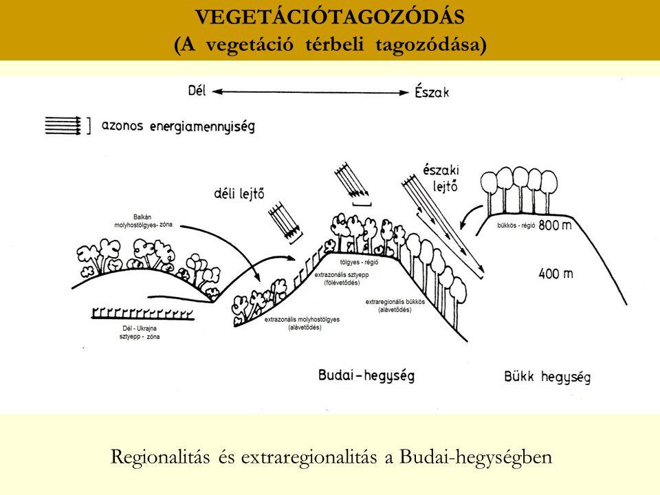 VEGETÁCIÓTAGOZÓDÁS (A vegetáció térbeli tagozódása) Regionalitás és extraregionalitás a Budai-hegységben