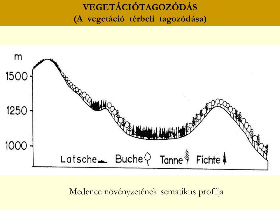 VEGETÁCIÓTAGOZÓDÁS (A vegetáció térbeli tagozódása) Medence növényzetének sematikus profilja