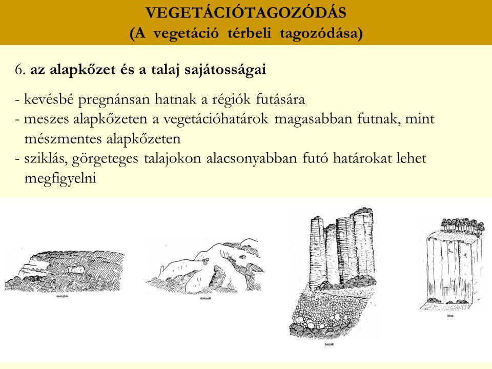VEGETÁCIÓTAGOZÓDÁS (A vegetáció térbeli tagozódása) 6. az alapkőzet és a talaj sajátosságai - kevésbé pregnánsan hatnak a régiók futására - meszes ala