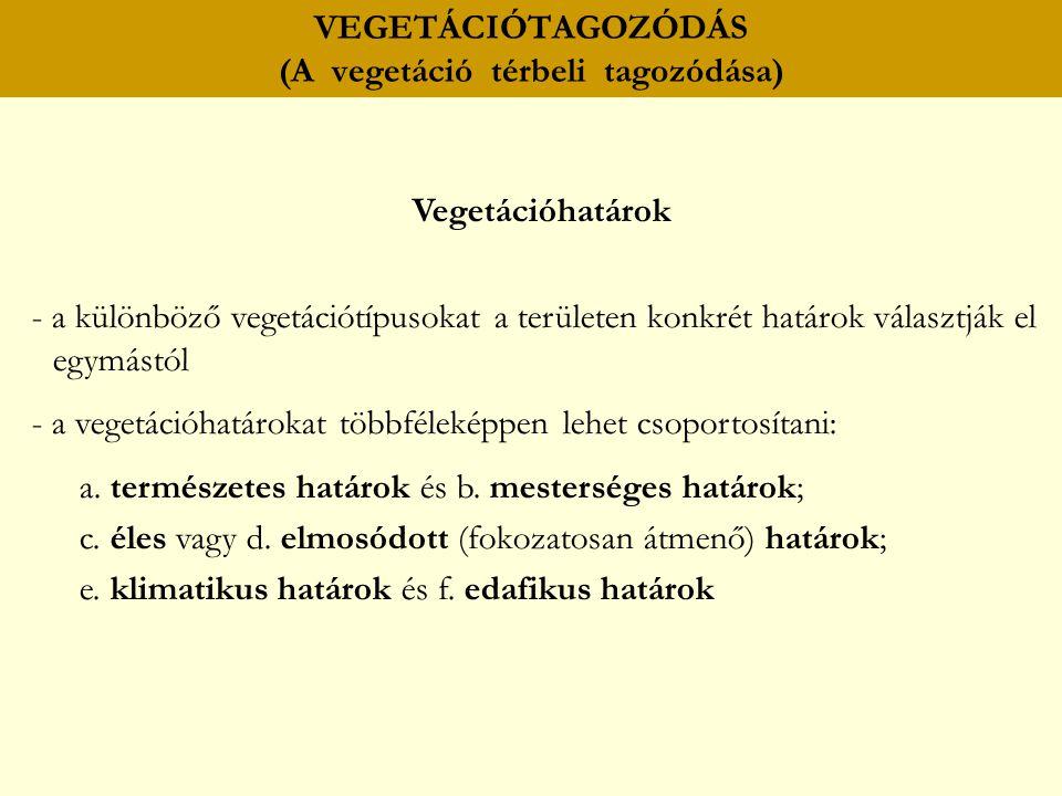 VEGETÁCIÓTAGOZÓDÁS (A vegetáció térbeli tagozódása) Vegetációhatárok - a különböző vegetációtípusokat a területen konkrét határok választják el egymás