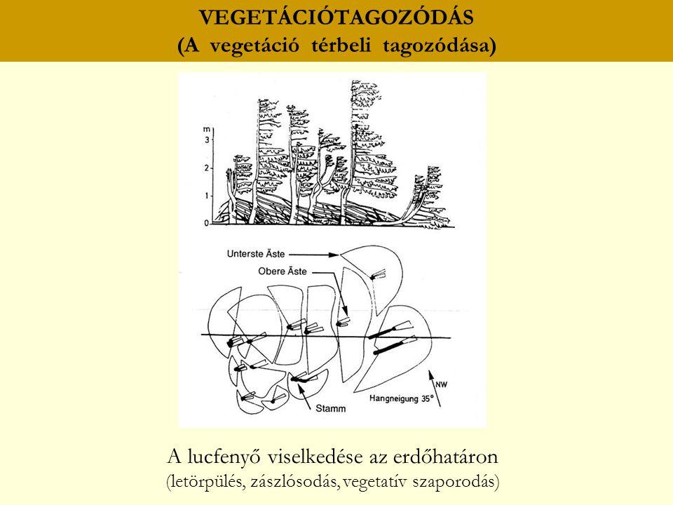 VEGETÁCIÓTAGOZÓDÁS (A vegetáció térbeli tagozódása) A lucfenyő viselkedése az erdőhatáron (letörpülés, zászlósodás, vegetatív szaporodás)