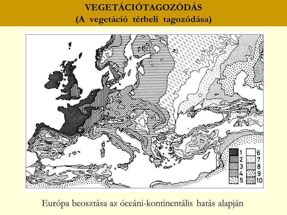 VEGETÁCIÓTAGOZÓDÁS (A vegetáció térbeli tagozódása) Európa beosztása az óceáni-kontinentális hatás alapján