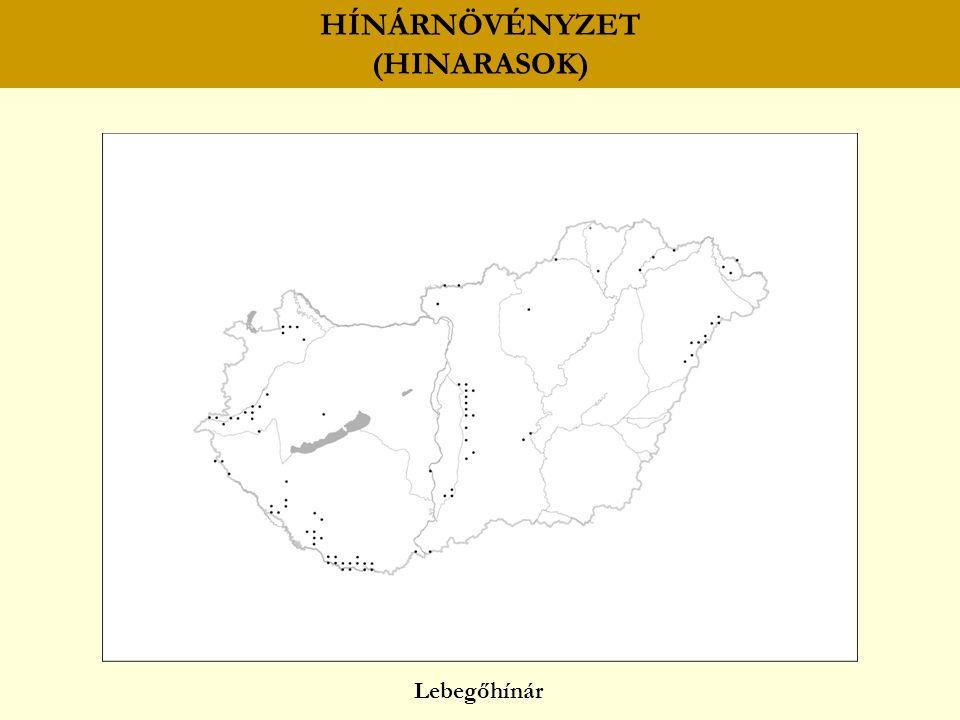 HÍNÁRNÖVÉNYZET (HINARASOK) Lebegőhínár