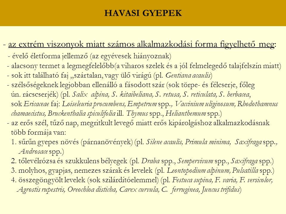 HAVASI GYEPEK - az extrém viszonyok miatt számos alkalmazkodási forma figyelhető meg: - évelő életforma jellemző (az egyévesek hiányoznak) - alacsony