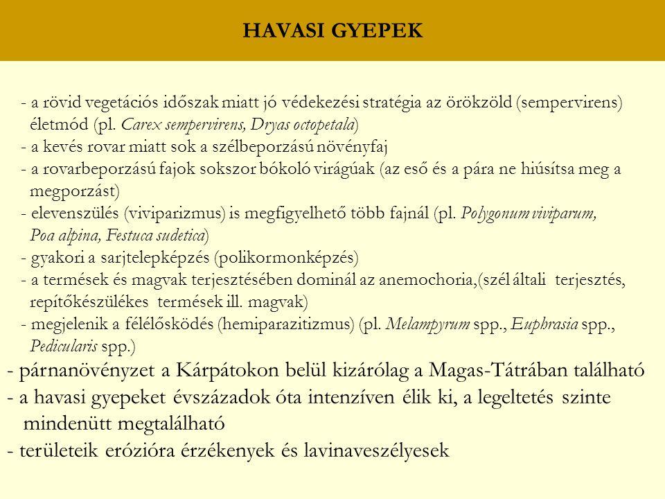 HAVASI GYEPEK - a rövid vegetációs időszak miatt jó védekezési stratégia az örökzöld (sempervirens) életmód (pl. Carex sempervirens, Dryas octopetala)
