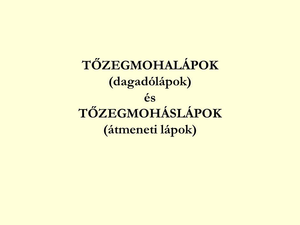 TŐZEGMOHALÁPOK (dagadólápok) és TŐZEGMOHÁSLÁPOK (átmeneti lápok)