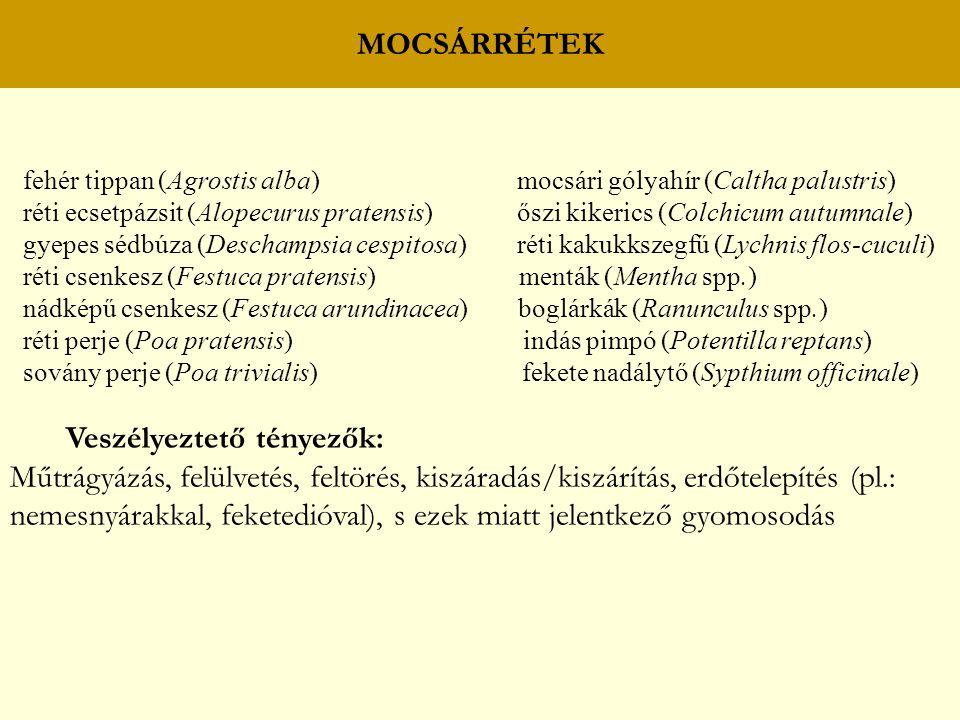 MOCSÁRRÉTEK fehér tippan (Agrostis alba) mocsári gólyahír (Caltha palustris) réti ecsetpázsit (Alopecurus pratensis) őszi kikerics (Colchicum autumnal