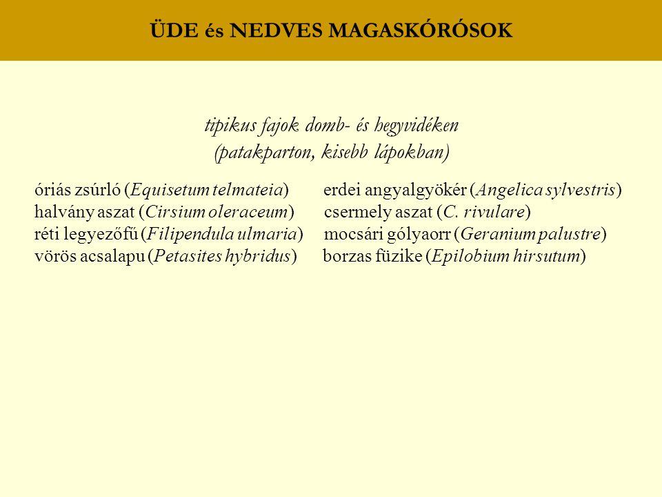 ÜDE és NEDVES MAGASKÓRÓSOK tipikus fajok domb- és hegyvidéken (patakparton, kisebb lápokban) óriás zsúrló (Equisetum telmateia) erdei angyalgyökér (An