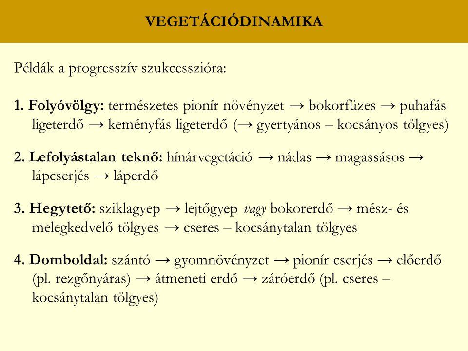 VEGETÁCIÓDINAMIKA Példák a progresszív szukcesszióra: 1. Folyóvölgy: természetes pionír növényzet → bokorfüzes → puhafás ligeterdő → keményfás ligeter
