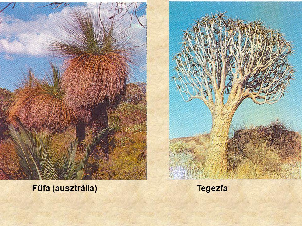 Fűfa (ausztrália)Tegezfa
