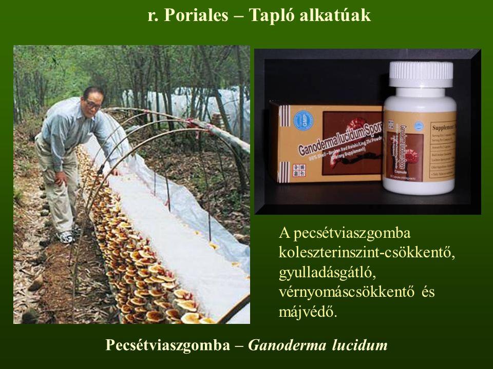 r. Poriales – Tapló alkatúak A pecsétviaszgomba koleszterinszint-csökkentő, gyulladásgátló, vérnyomáscsökkentő és májvédő.
