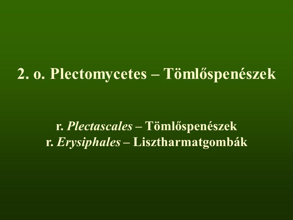 2.o. Plectomycetes – Tömlőspenészek r. Plectascales – Tömlőspenészek r.