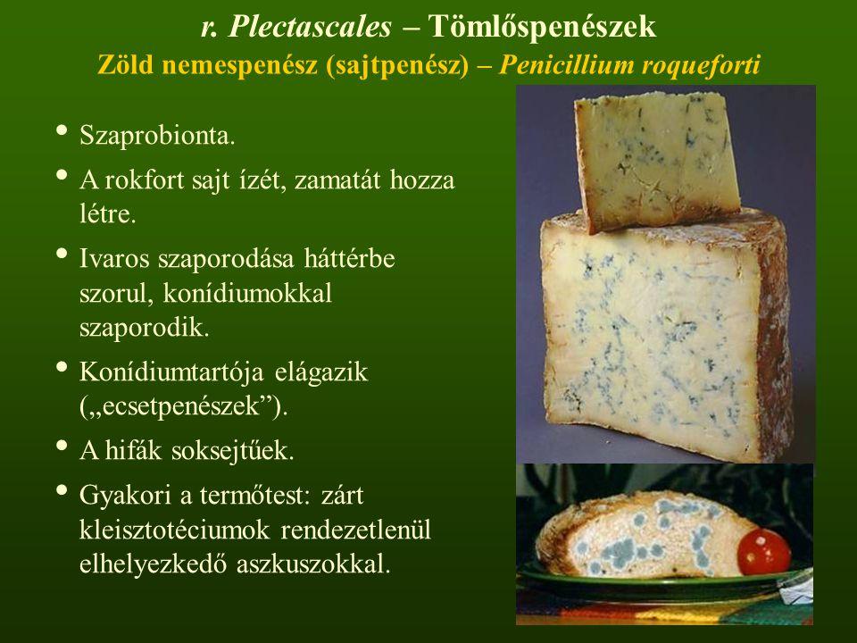 Zöld nemespenész (sajtpenész) – Penicillium roqueforti Szaprobionta.