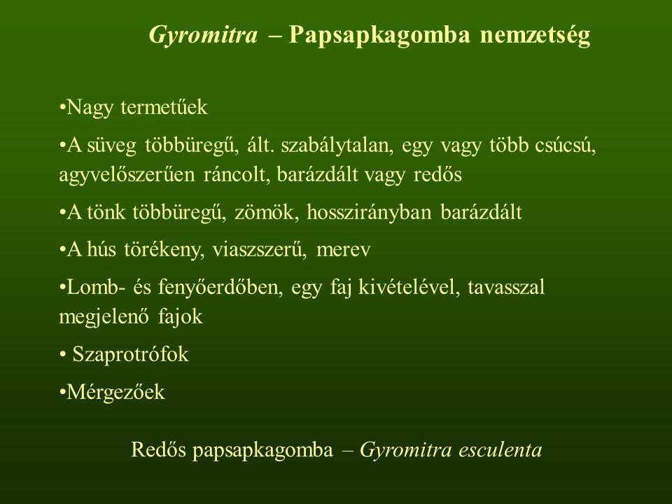 Gyromitra – Papsapkagomba nemzetség Nagy termetűek A süveg többüregű, ált.