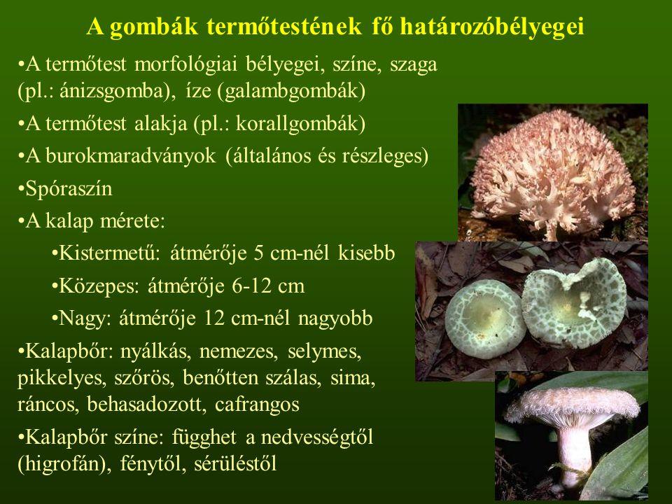 A gombák termőtestének fő határozóbélyegei A termőtest morfológiai bélyegei, színe, szaga (pl.: ánizsgomba), íze (galambgombák) A termőtest alakja (pl.: korallgombák) A burokmaradványok (általános és részleges) Spóraszín A kalap mérete: Kistermetű: átmérője 5 cm-nél kisebb Közepes: átmérője 6-12 cm Nagy: átmérője 12 cm-nél nagyobb Kalapbőr: nyálkás, nemezes, selymes, pikkelyes, szőrös, benőtten szálas, sima, ráncos, behasadozott, cafrangos Kalapbőr színe: függhet a nedvességtől (higrofán), fénytől, sérüléstől