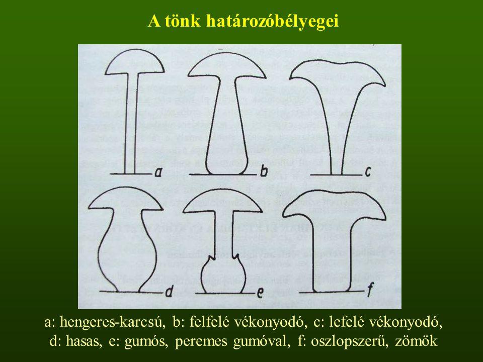 A tönk határozóbélyegei a: hengeres-karcsú, b: felfelé vékonyodó, c: lefelé vékonyodó, d: hasas, e: gumós, peremes gumóval, f: oszlopszerű, zömök