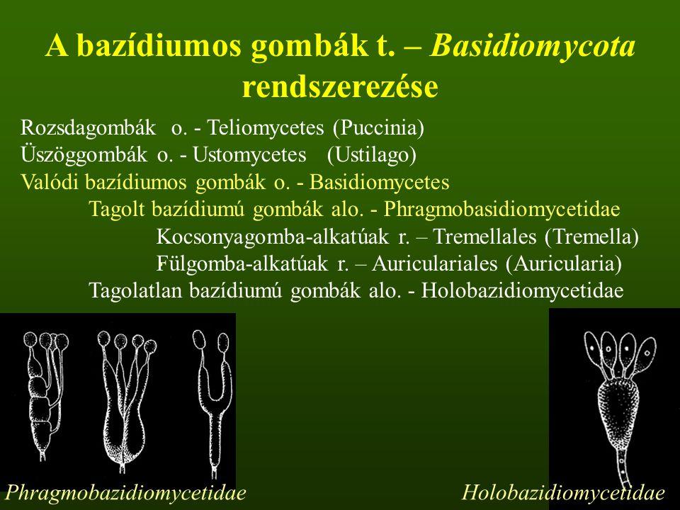 Rozsdagombák o.- Teliomycetes (Puccinia) Üszöggombák o.