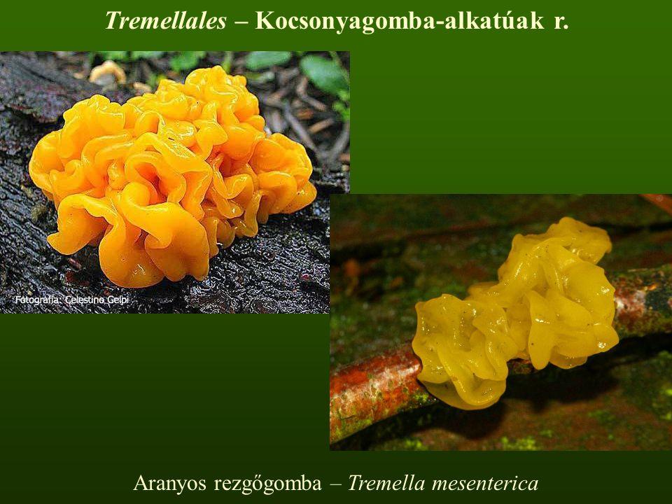 Aranyos rezgőgomba – Tremella mesenterica Tremellales – Kocsonyagomba-alkatúak r.
