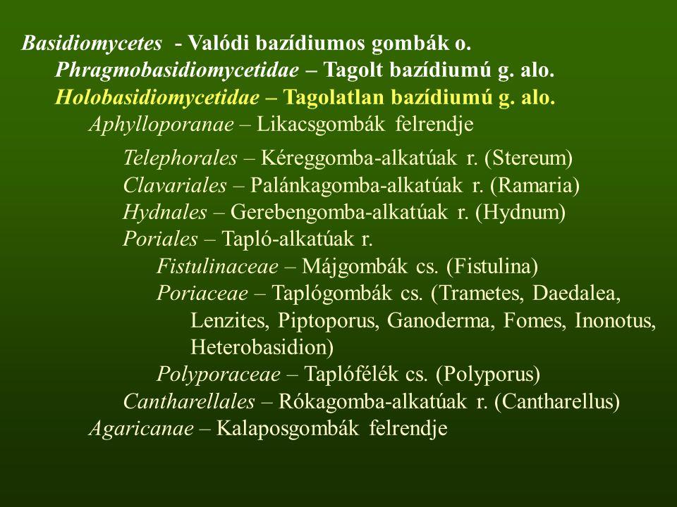 Basidiomycetes - Valódi bazídiumos gombák o.Phragmobasidiomycetidae – Tagolt bazídiumú g.