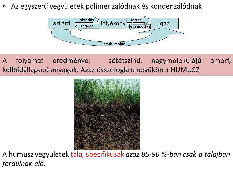 Humuszképződés v.humifikáció 1.Posztmortális anyag előkészítése a lebontásra.