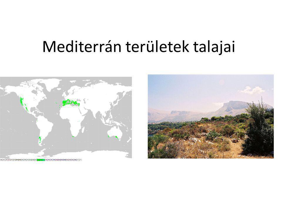 Mediterrán területek talajai