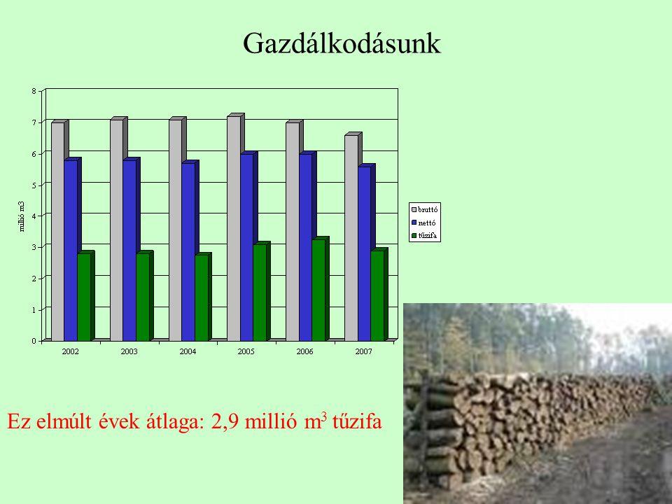 Gazdálkodásunk Ez elmúlt évek átlaga: 2,9 millió m 3 tűzifa