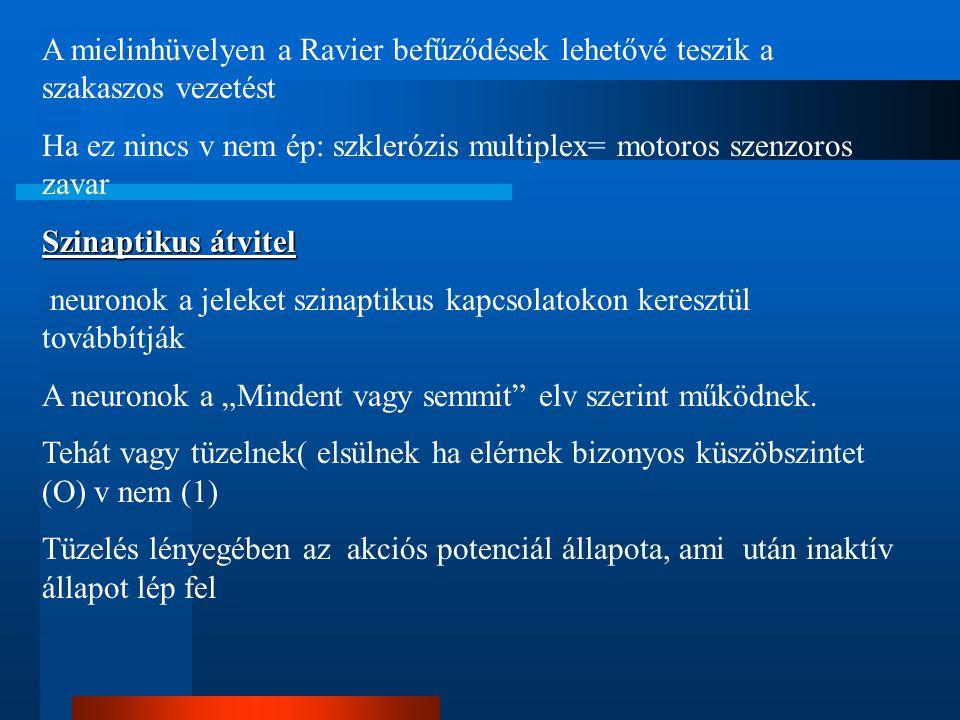 A mielinhüvelyen a Ravier befűződések lehetővé teszik a szakaszos vezetést Ha ez nincs v nem ép: szklerózis multiplex= motoros szenzoros zavar Szinapt