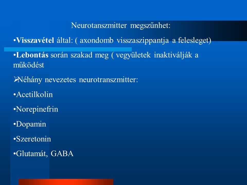 Neurotanszmitter megszűnhet: Visszavétel által: ( axondomb visszaszippantja a felesleget) Lebontás során szakad meg ( vegyületek inaktiválják a működést  Néhány nevezetes neurotranszmitter: Acetilkolin Norepinefrin Dopamin Szeretonin Glutamát, GABA
