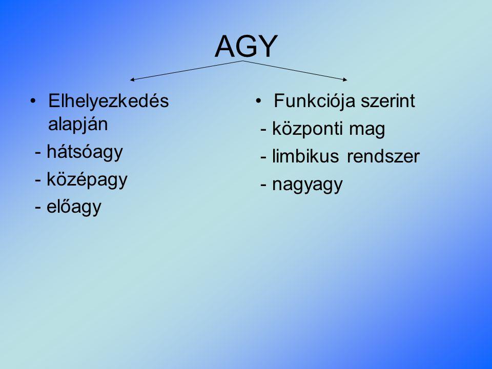 AGY Elhelyezkedés alapján - hátsóagy - középagy - előagy Funkciója szerint - központi mag - limbikus rendszer - nagyagy