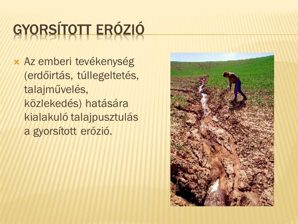  Az emberi tevékenység (erdőirtás, túllegeltetés, talajművelés, közlekedés) hatására kialakuló talajpusztulás a gyorsított erózió.